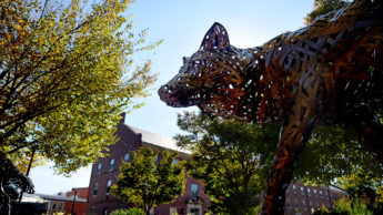 Photo of bronze wolf statue on NC State's Central Campus.